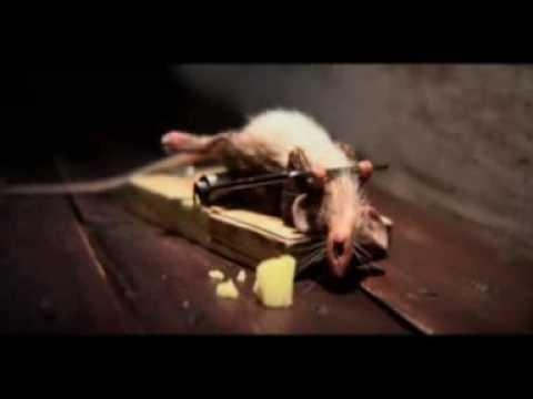 Die Maus hats drauf | Werbung | Was is hier eigentlich los?