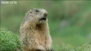 Tiere reden lustig (ECHT) | Lustiges | Was is hier eigentlich los? | wihel.de