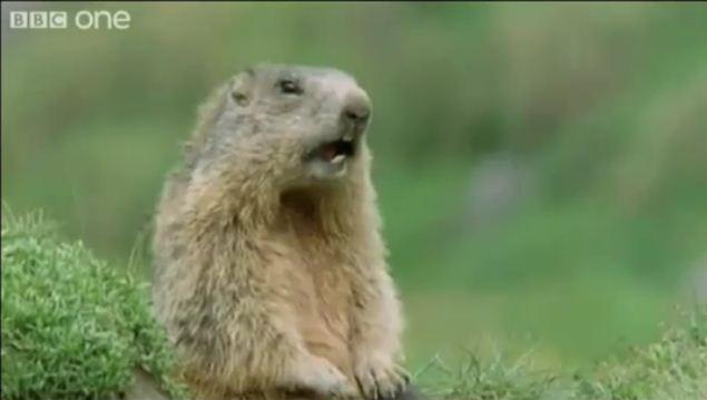 Tiere reden lustig (ECHT) | Lustiges | Was is hier eigentlich los?
