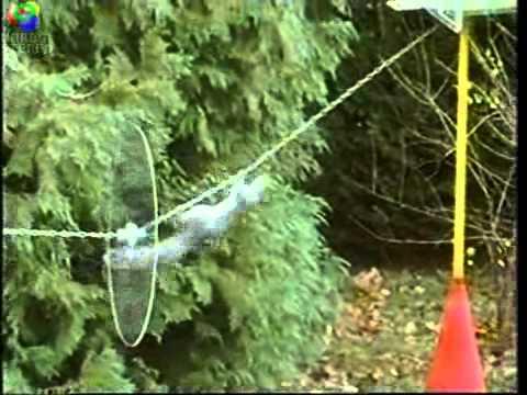 Krasses Eichhörnchen mit Landeanflug in L.A. | Awesome | Was is hier eigentlich los?