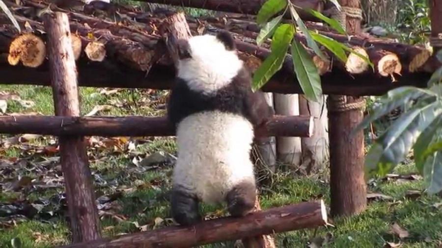 Wie ich Abends ins Bett gehe - als Panda | Ohne Worte | Was is hier eigentlich los?
