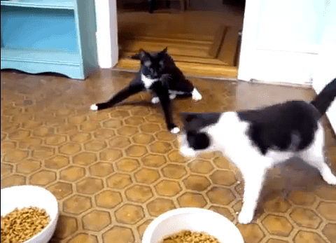 Katzen nach der Narkose | Lustiges | Was is hier eigentlich los? | wihel.de
