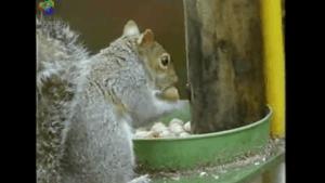 Das Mission-Impossible-Eichhörnchen | Awesome | Was is hier eigentlich los? | wihel.de