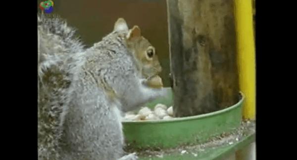 Das Mission-Impossible-Eichhörnchen   Awesome   Was is hier eigentlich los?