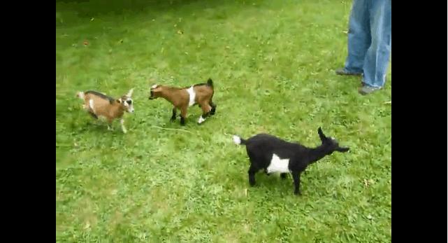 Buttermlich spielt mit seinen Freunden