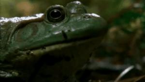 Wie sich eine Echse einem Frosch erwehrt | Awesome | Was is hier eigentlich los? | wihel.de