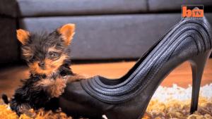 Der kleinste Hund der Welt | Ohne Worte | Was is hier eigentlich los? | wihel.de
