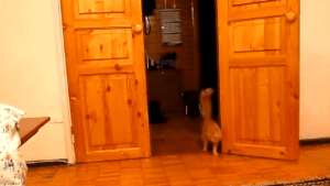 Wie man Katzen mit Super Mario erschreckt | WTF | Was is hier eigentlich los? | wihel.de