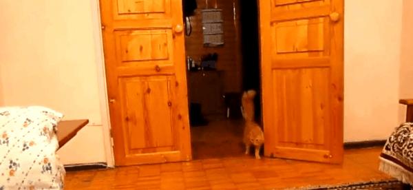 Wie man Katzen mit Super Mario erschreckt