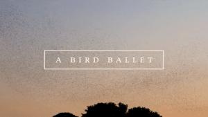 A bird ballet | Awesome | Was is hier eigentlich los? | wihel.de