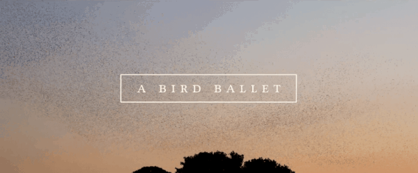 A bird ballet | Awesome | Was is hier eigentlich los?