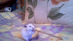 Der Hamster mit der Salzstange | Lustiges | Was is hier eigentlich los? | wihel.de