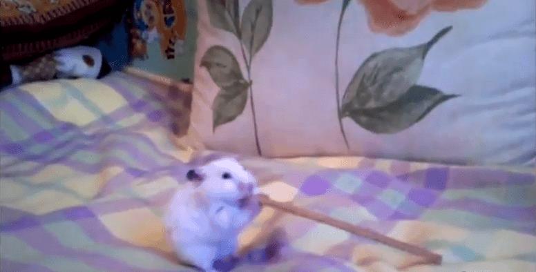 Der Hamster mit der Salzstange