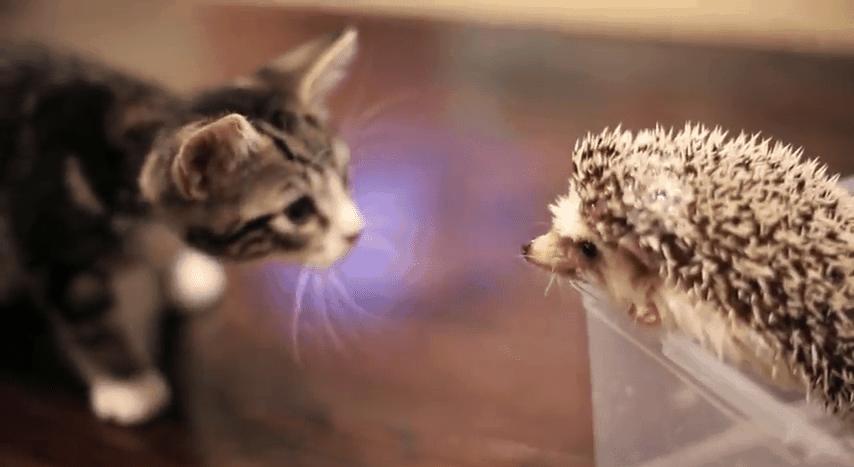 Wie die Katze den Igel traf | Mädchenkram | Was is hier eigentlich los? | wihel.de