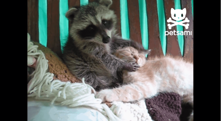 Haustiere sind süß