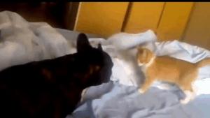 Die Assassinen-Katze oder: Wie es bei uns morgens im Bett zu geht | Mädchenkram | Was is hier eigentlich los?