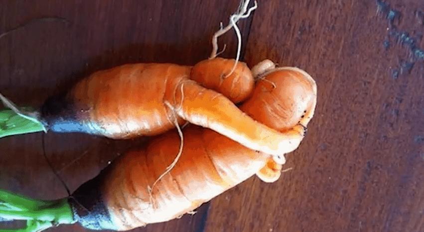Karotten-Liebe | Nerd-Kram | Was is hier eigentlich los? | wihel.de