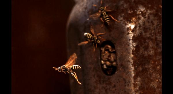 Wespen in Slow Mo
