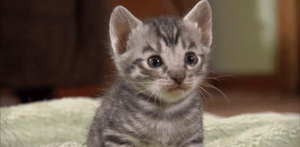 Nur süße Katzenbabys