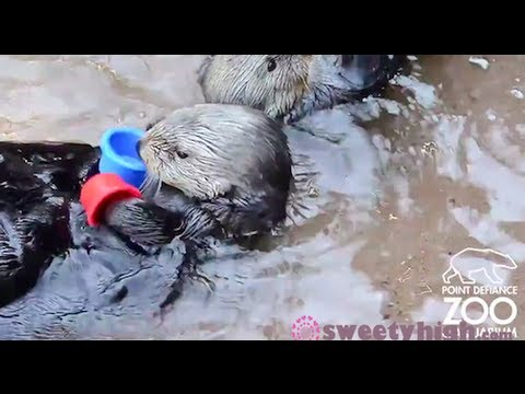 The Cup Song (Animal Version) | Ohne Worte | Was is hier eigentlich los?