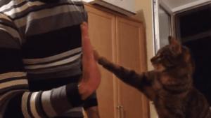 Vielleicht sind Katzen doch nicht so scheiße | Awesome | Was is hier eigentlich los? | wihel.de