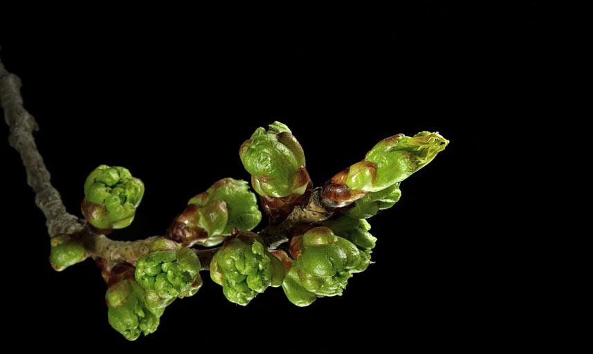 Pflanzen-Makro-Timelapse