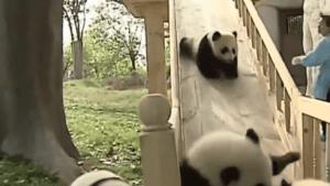 Pandas auf der Rutsche | Mädchenkram | Was is hier eigentlich los? | wihel.de