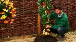 Die Zukunft hat begonnen: eine Pflanze mit Tomaten UND Kartoffeln | Nerd-Kram | Was is hier eigentlich los? | wihel.de
