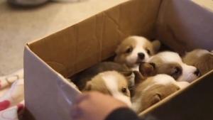 Nur eine Box voller Welpen | Mädchenkram | Was is hier eigentlich los? | wihel.de