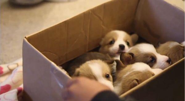Nur eine Box voller Welpen | Mädchenkram | Was is hier eigentlich los?