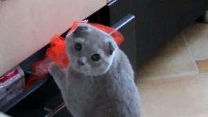 Die witzigsten Katzen 2013 | Lustiges | Was is hier eigentlich los? | wihel.de