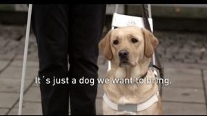 Warum es eine gute Idee war, Hunde als Blindenführer zu nehmen | Lustiges | Was is hier eigentlich los? | wihel.de