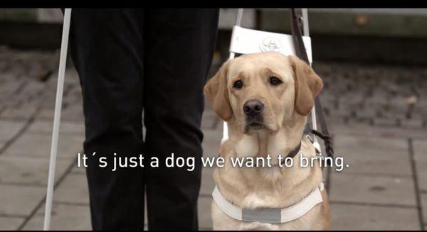 Warum es eine gute Idee war, Hunde als Blindenführer zu nehmen