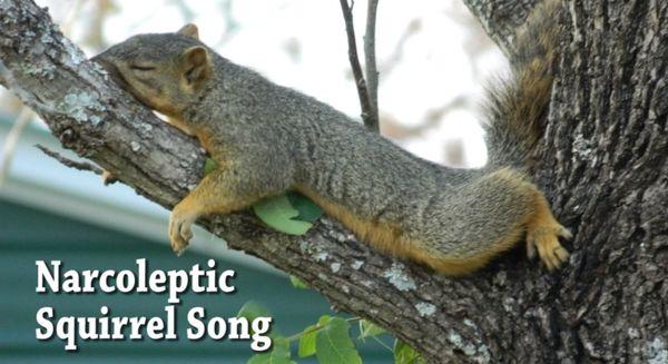 Der Narkolepsie-Song | Musik | Was is hier eigentlich los? | wihel.de