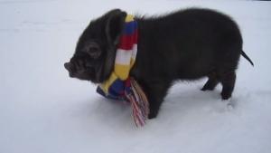 Die beste Compilation voller Minischweine, die ihr jemals gesehen habt | Mädchenkram | Was is hier eigentlich los? | wihel.de