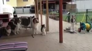 Hunde werden mit dem Namen zum Essen gerufen | Lustiges | Was is hier eigentlich los? | wihel.de