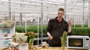 In Holland kommen die Tulpen jetzt aus der Mikrowelle | Werbung | Was is hier eigentlich los? | wihel.de
