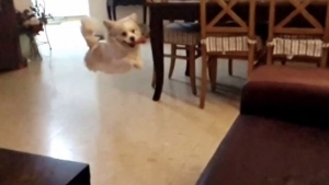 Der Montagshund | Lustiges | Was is hier eigentlich los?