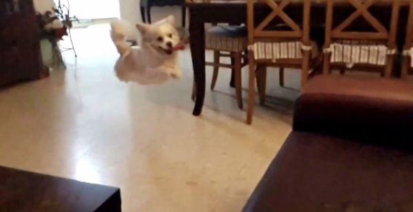 Der Montagshund