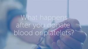 Was passiert mit dem Blut nach der Spende? | Was gelernt | Was is hier eigentlich los?
