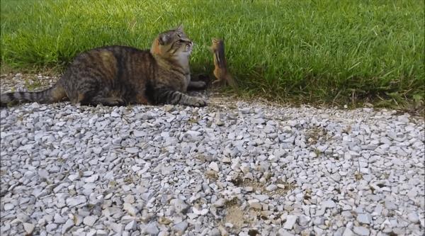 Never give up - Die Geschichte von der Katze und dem Hörnchen | Lustiges | Was is hier eigentlich los?