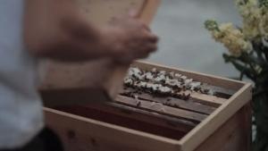 Wie man Bienen in Hong Kong züchtet | Was gelernt | Was is hier eigentlich los? | wihel.de