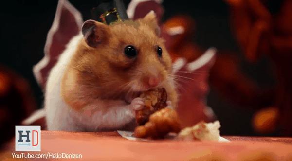 Ein Festmahl für Nagetiere an Thanksgiving