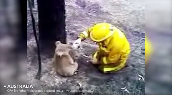 Wieder Menschen, die Tiere retten