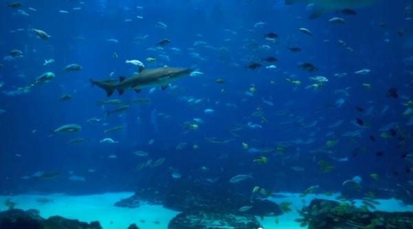 6 Stunden Ozean-Aquarium