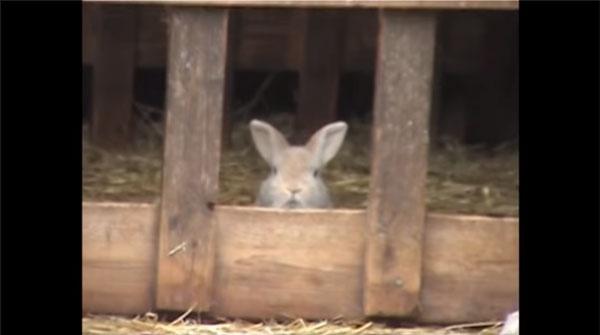 Ein Hase, der ein Schäferhund sein wollte | Lustiges | Was is hier eigentlich los? | wihel.de