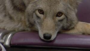 Modest Mouse - Coyotes | Musik | Was is hier eigentlich los? | wihel.de