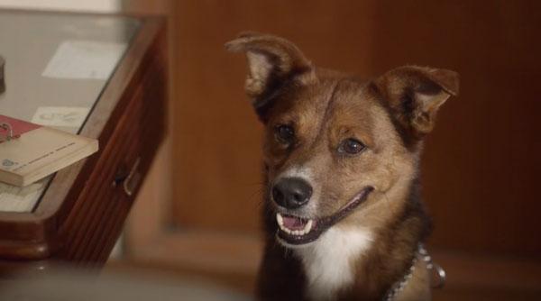 Ein Mann mit Hund | Mädchenkram | Was is hier eigentlich los? | wihel.de