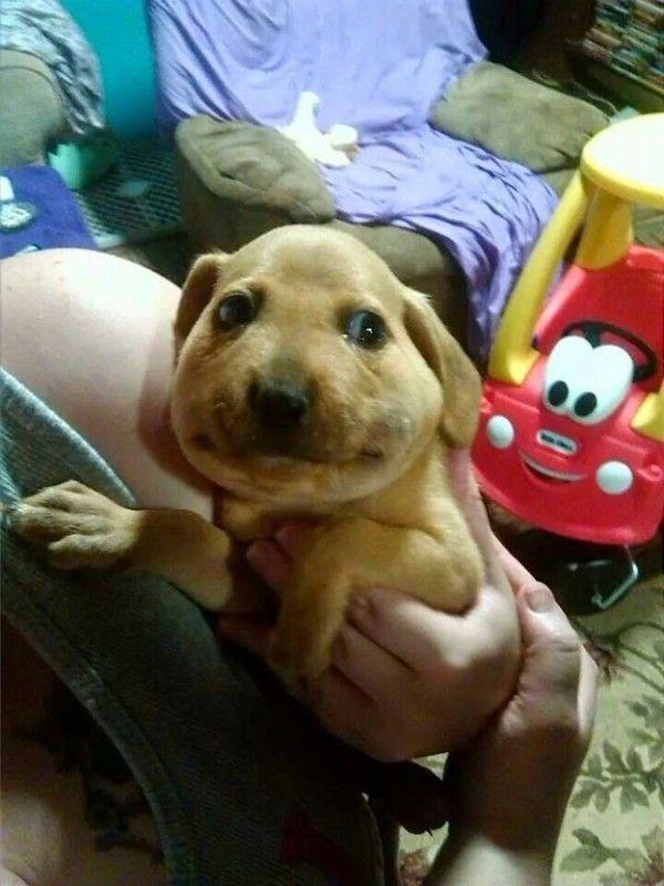 Hunde vs. Bienen - David gg. Goliath | Lustiges | Was is hier eigentlich los?