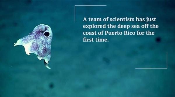 Was im Meer vor Puerto Rico so rumschwimmt | Awesome | Was is hier eigentlich los? | wihel.de